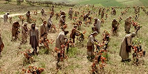 Laborers in the Vineyard