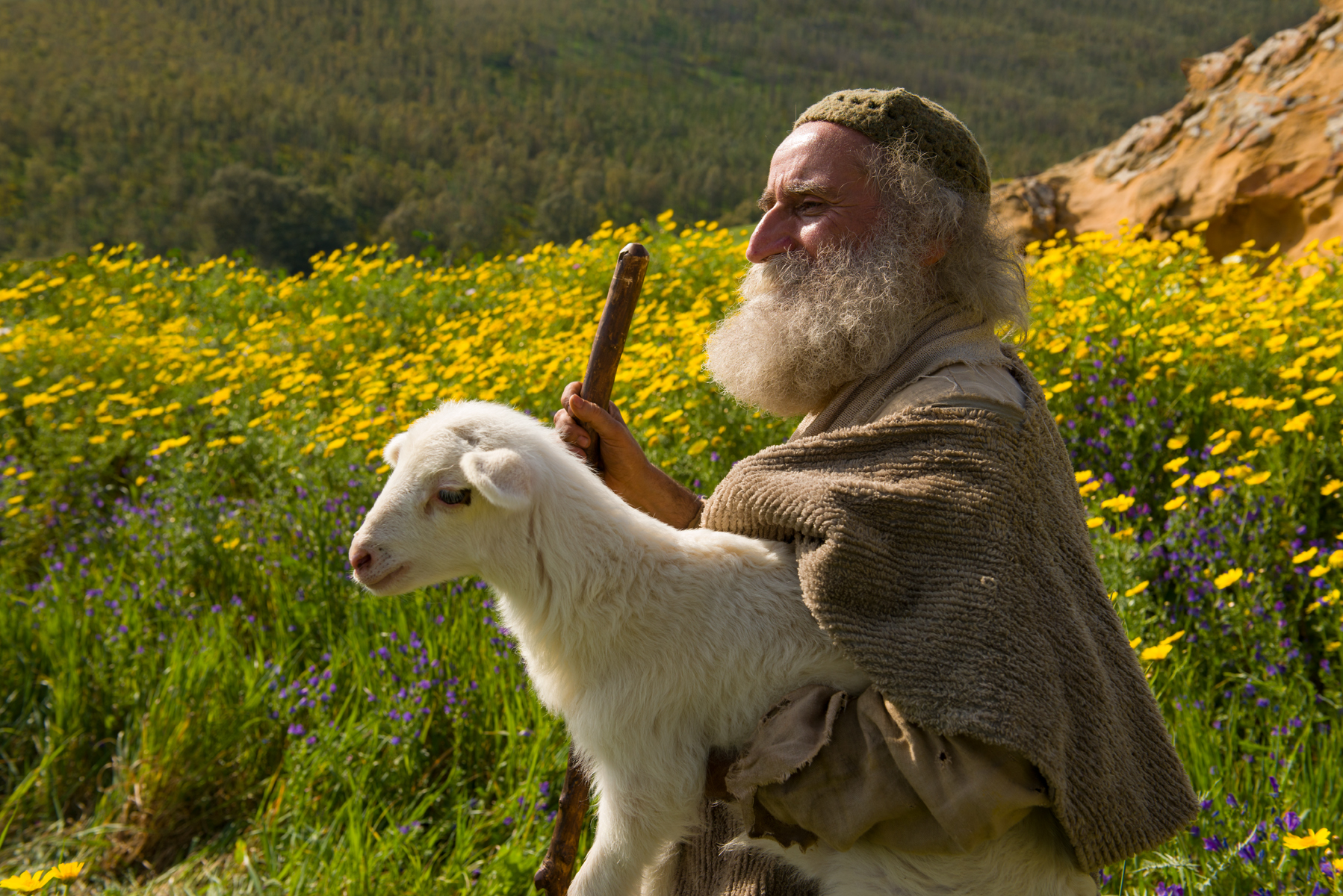 Jesus Declares the Parable of the Lost Sheep - Bible Videos - Jesus  Declares the Parable of the Lost Sheep