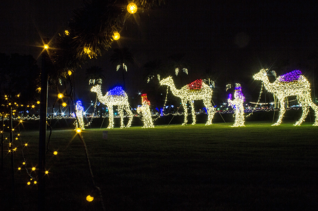 Wise men and camels are illuminated on the north lawn of the mesa arizona temple photo by clint adair