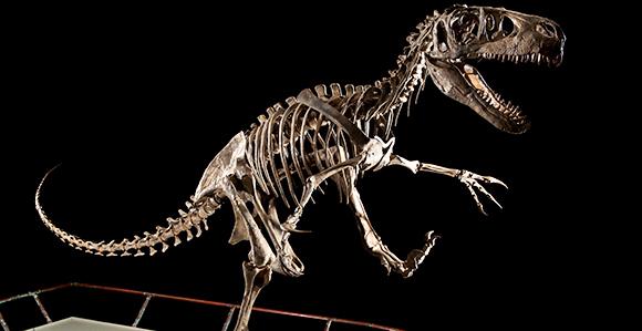 Image result for Paleontology