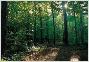 Image of The Sacred Grove