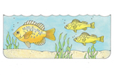 Primary Cutout Illustration Fish