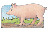 Primary Cutout Illustration of Pig