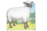 Primary Cutout Illustration Sheep