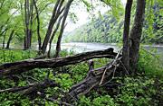 Susquehanna River near Harmony