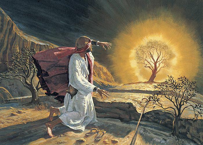 Burning Bush on Mount Sinai