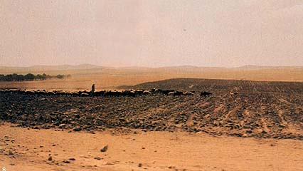 Wadi Faria