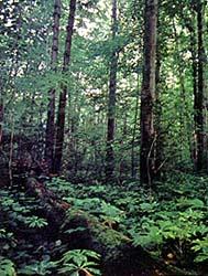 Crary woods