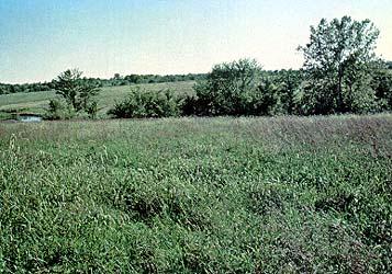 John Cooper's rolling acres