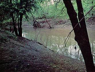The tranquil waters of Shoal Creek