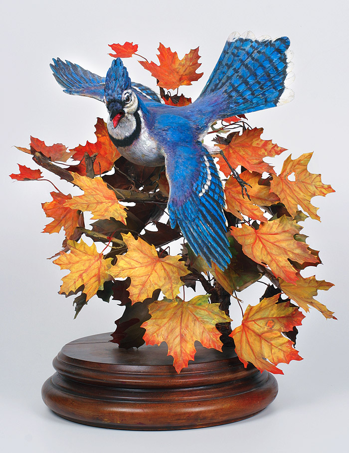 Blue Jay, Norway Maple Leaves