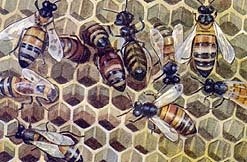 and honeybees