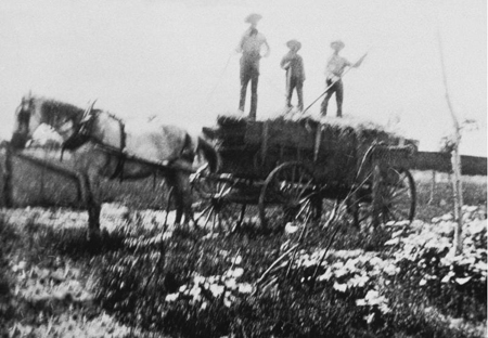 young men on hay wagon
