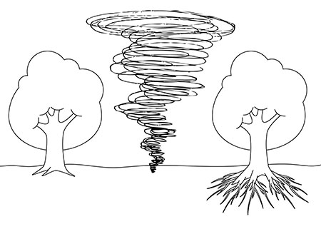 drawing, trees and roots
