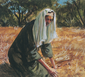 Ruth collecting wheat
