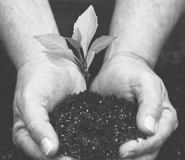 hands holding seedling in soil