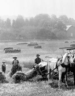 farmers harvesting field