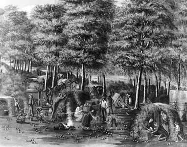 pioneers collecting quail