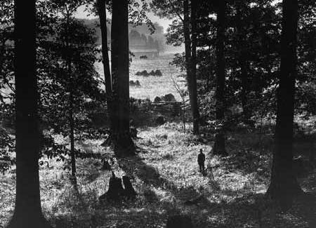 The Sacred Grove in Palmyra, New York from a circa 1907 photograph