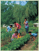 family in vegetable garden