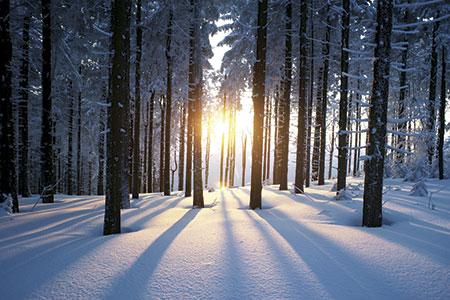 The sun shining through trees