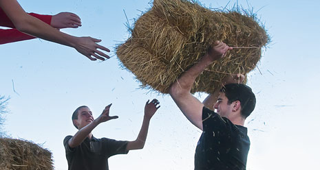 young men lifting bale of hay