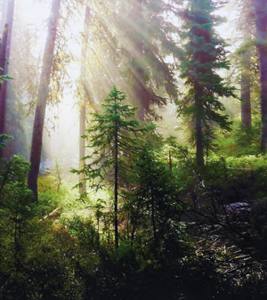 light shining through a forest