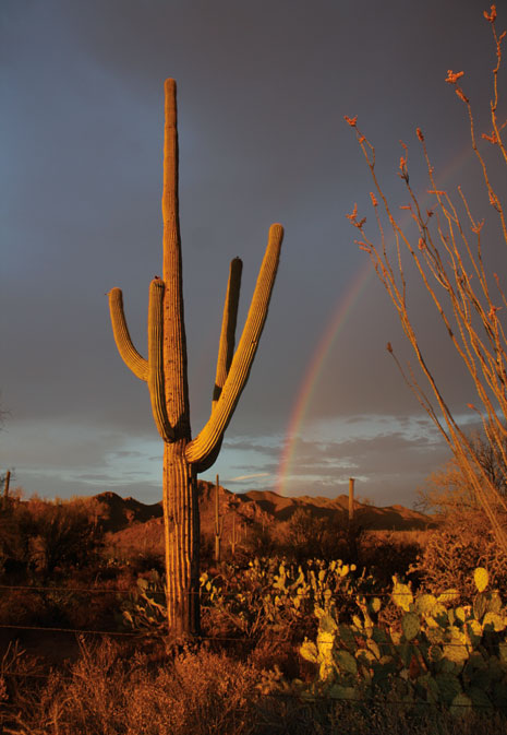 cactus and rainbow
